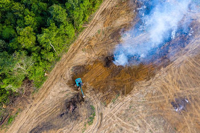 cambio climatico deforestacion