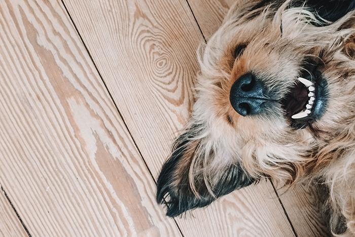 cuáles son los cuidados del perro