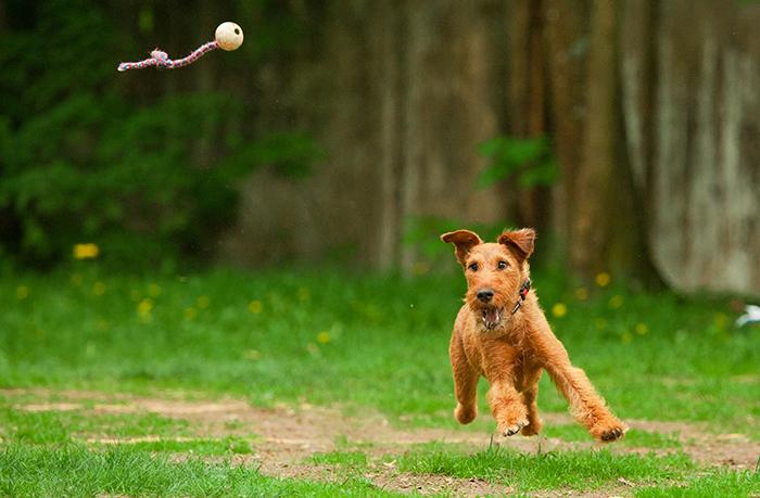 cuidados del perro feliz